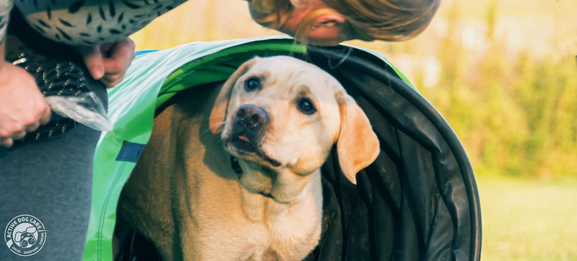 Behendigheid tunnel - hondenschool Active Dog Care