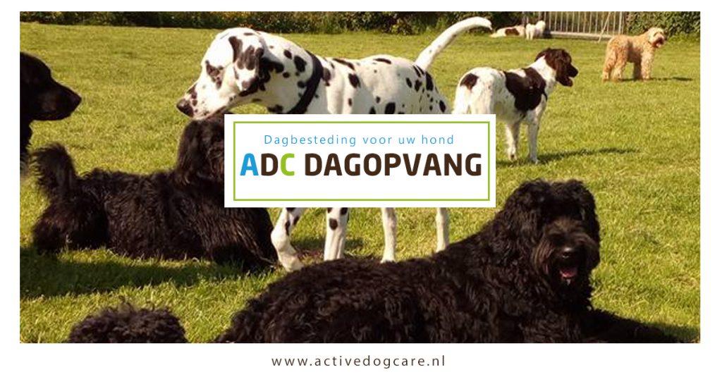 ADC dagopvang - dagbesteding voor uw hond