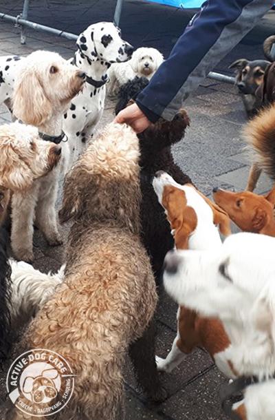 Roedel in dagopvang voor honden