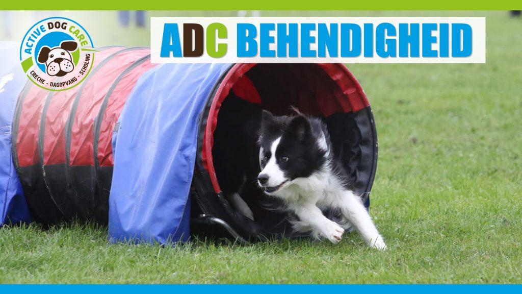 ADC behendigheid cursus
