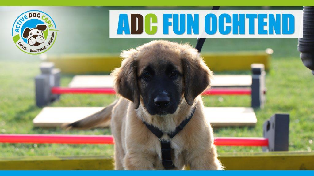 ADC fun ochtend - workshop voor honden